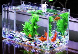 Bể cá cảnh để bàn
