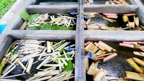 cách xử lý bể cá mới