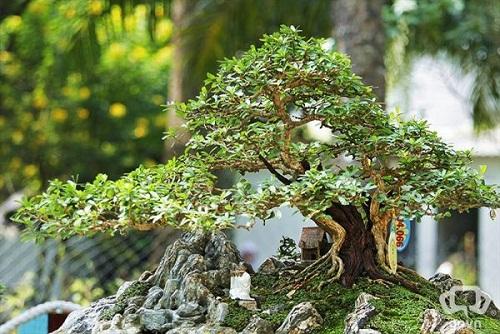cách trồng rêu trên đá