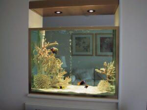 trang trí hồ cá bằng san hô