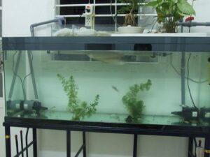lọc nước bể cá