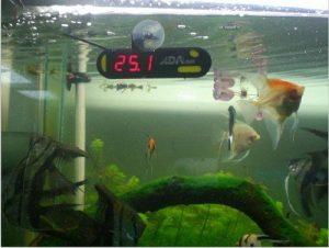 nhiệt kế bể cá