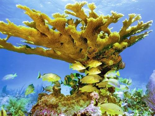 Bể san hô lớn