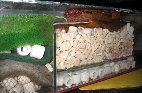 bể lọc bằng san hô vụn