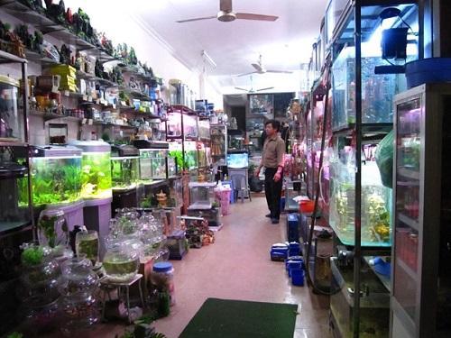 cửa hàng bán bể cá cảnh
