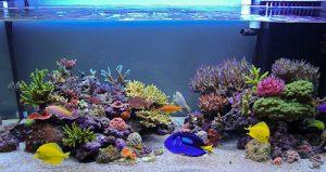 thiết kế bể cá trang trí san hô