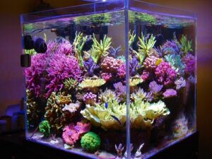 bể san hô tươi