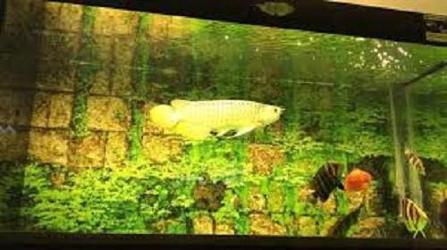bể nuôi cá rồng