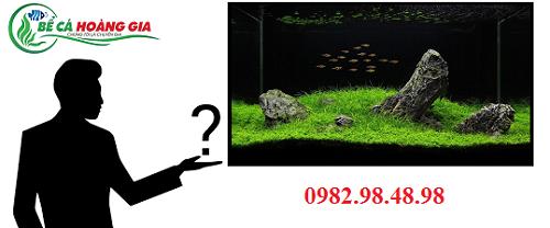 bể thủy sinh nên nuôi cá gì
