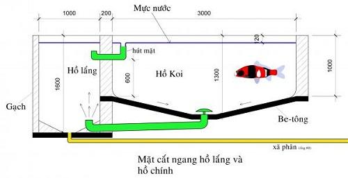 thiết kế bể cá koi