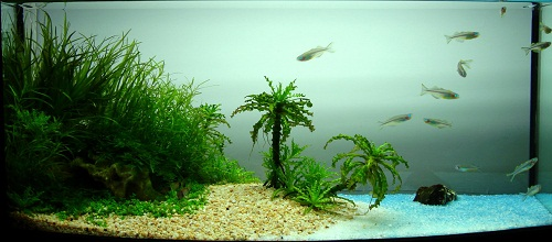trồng cây thủy sinh