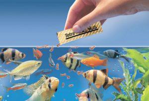 cho cá cảnh ăn