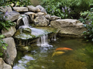 thác hồ cá koi