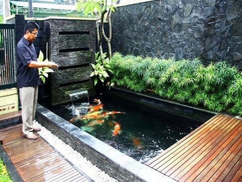 thiết kế bể cá