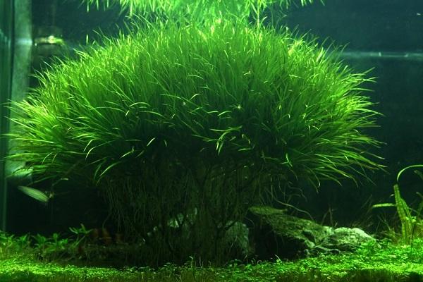 cây cỏ nhật