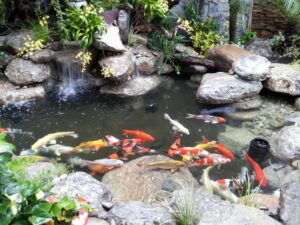 thác nước hồ cá koi