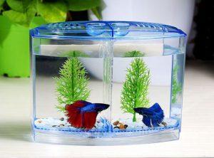 trang trí bể cá đơn giản