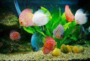 trang trí bể cá