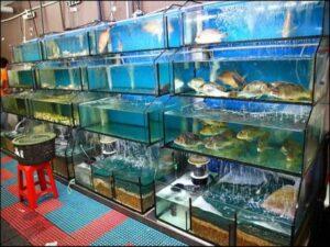thi công bể cá nhà hàng
