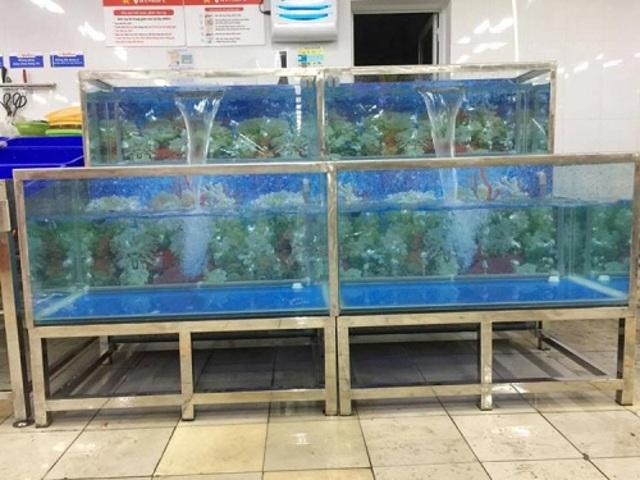 Bể hải sản kính khung inox hoặc khung sắt