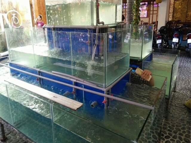 Cách thi công bể hải sản tại các nhà hàng