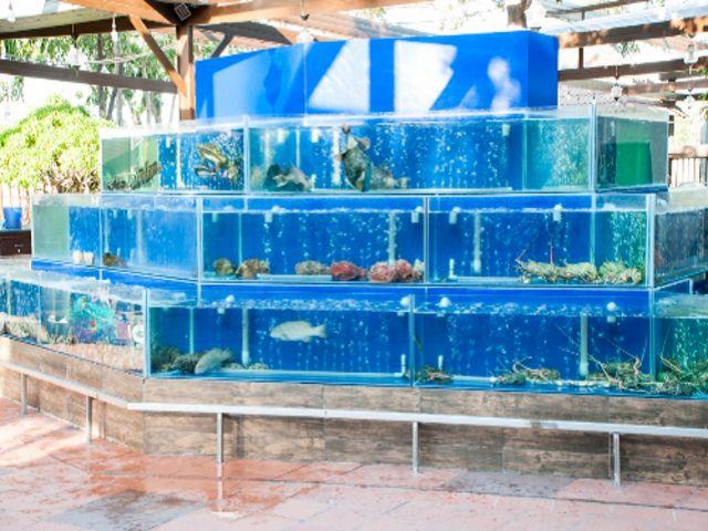 mẫu bể cá nà hàng