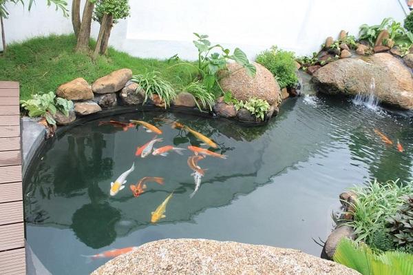 thiết kế thi công bể cá