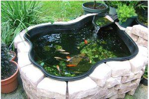 mẫu thiết kế hồ cá tiêu biểu