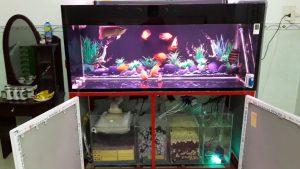 Hệ thống lọc bể cá rồng