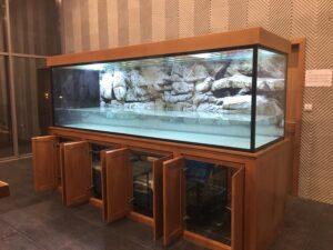 kích thước bể cá rồng