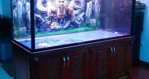làm bể cá rồng đẹp