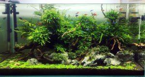 mẫu bể cá đẹp thu hut