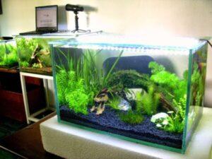 mẫu bể cá đẹp thủy sinh
