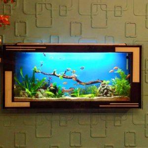 mẫu bể cá đẹp treo tường