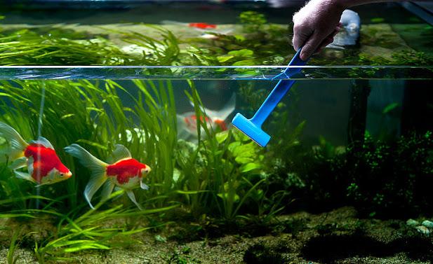 xử lý làm sạch bể cá