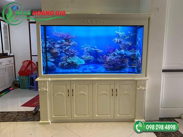 Bể cá rồng nhà anh Công ở Giải Phóng, Hà Nội