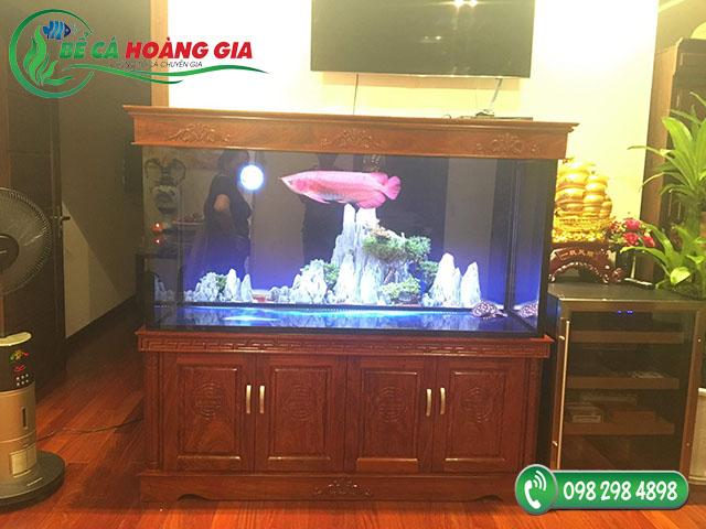 Bể cá rồng nhà anh Trương ở Vĩnh Phúc