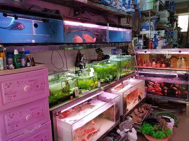 Địa chỉ mua bể cá rồng